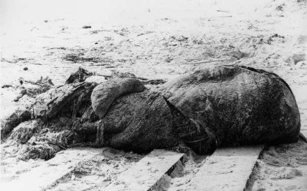 The carcass of the St. Augustine Monster