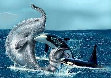 Trunko & killer whales, Bill Asmussen