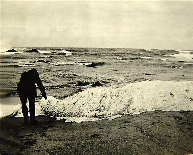 One of the original photos of Trunko washed up on the beach