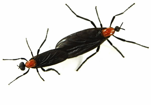 Love-bugs-mating-2