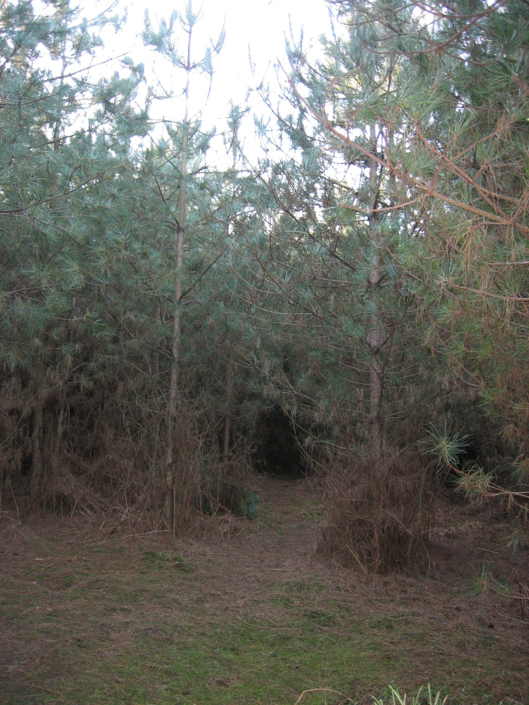 The clearing in Rendlesham Forest where the UFO is alleged to have landed
