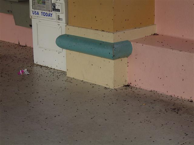 A swarm of lovebugs at a bus stop in Walt Disney World