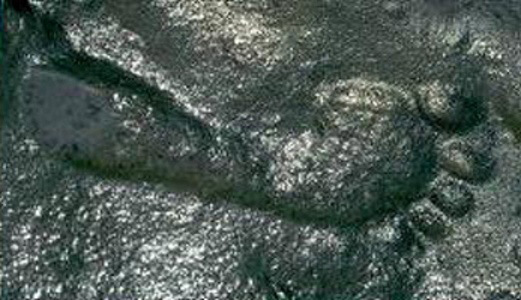 290-million-year-old-footprint-Ancient-Code