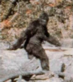An alleged photo of Bigfoot