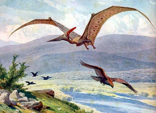 Pterodactyls in Yosemite?